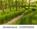 a path through fresh green... | Shutterstock . vector #1135533650