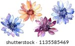colorful african daisy. floral... | Shutterstock . vector #1135585469