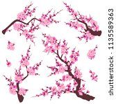 set of flowering tree branches... | Shutterstock .eps vector #1135589363