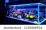 Saltwater coral reef aquarium at home is most beautiful live decoration - stock photo