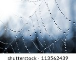 Spider Web With Dew Drops...