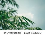 bottom view bamboo leaves out... | Shutterstock . vector #1135763330