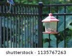 blue jay songbird flying onto... | Shutterstock . vector #1135767263