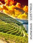 travel in river douro region in ... | Shutterstock . vector #1135774013