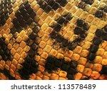 Yellow Anaconda Skin From Alive ...