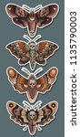 vector moth set traditional... | Shutterstock .eps vector #1135790003