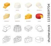 parmesan  roquefort  maasdam ... | Shutterstock . vector #1135809704