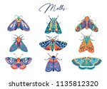 decorative moth collection in... | Shutterstock .eps vector #1135812320