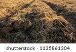 soil for planting | Shutterstock . vector #1135861304
