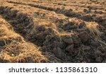 soil for planting | Shutterstock . vector #1135861310