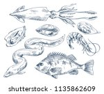 edible shellfish oyster and... | Shutterstock .eps vector #1135862609