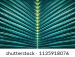 striped of tropical palm leaf ... | Shutterstock . vector #1135918076