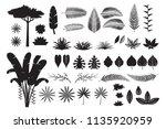 leaves tropical jungle... | Shutterstock .eps vector #1135920959