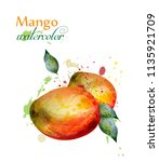 mango fruit watercolor vector.... | Shutterstock .eps vector #1135921709