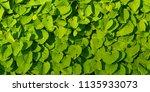 green leaves background. | Shutterstock . vector #1135933073