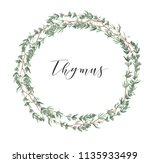 round thyme frame for wedding... | Shutterstock . vector #1135933499