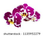 orchird flowers branch isolated ... | Shutterstock . vector #1135952279