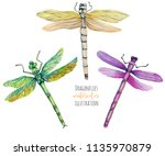 Stock photo watercolor colorful dragonflies illustration hand painted isolated on a white background 1135970879