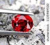 beautiful blood red songea... | Shutterstock . vector #1135989530