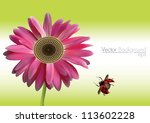Vector Gerbera Daisy  And...