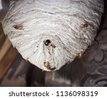 wasp nest with wasps | Shutterstock . vector #1136098319