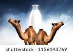camel milk illustration | Shutterstock . vector #1136143769