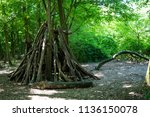 hut made of tree trunks  in... | Shutterstock . vector #1136150078