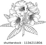 Rhododendron.vector Hand Drawn...
