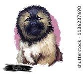 caucasian shepherd dog breed... | Shutterstock . vector #1136237690