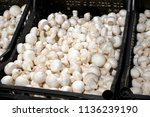 mushrooms champignons in black...   Shutterstock . vector #1136239190