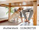 Happy Dog Sitting Under The...