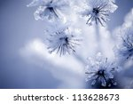close up of flower covered with ... | Shutterstock . vector #113628673