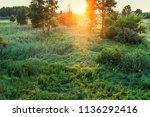 sundown over trees and...   Shutterstock . vector #1136292416