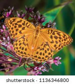 a beautiful butterfly sits on a ... | Shutterstock . vector #1136346800