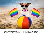 gay dog resting and relaxing on ... | Shutterstock . vector #1136351543