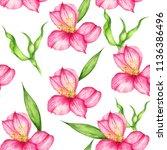watercolor pink alstroemeria... | Shutterstock . vector #1136386496
