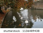 swans on the moat at the bishop'...   Shutterstock . vector #1136489438