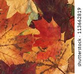 close up colorful autumn leaves ... | Shutterstock . vector #113662819