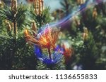 beautiful blooming flower in... | Shutterstock . vector #1136655833
