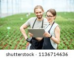 couple of workers working with... | Shutterstock . vector #1136714636