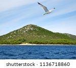 flying seagull near the pasman... | Shutterstock . vector #1136718860
