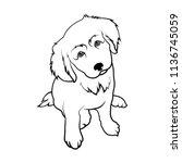Dog Breed Labrador. Puppy...