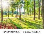 senior woman sitting on wooden... | Shutterstock . vector #1136748314