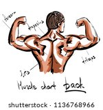 muscle chart of human back.... | Shutterstock .eps vector #1136768966