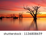 An Iconic Old Dead Redgum Tree...
