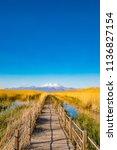 wooden bridge walkway path on...   Shutterstock . vector #1136827154
