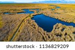 marshes and reeds wetland from...   Shutterstock . vector #1136829209