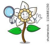 detective jasmine flower... | Shutterstock .eps vector #1136881250