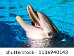 Dolphin Smile In Water. Cute...