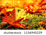 autumn maple leaf on ground.... | Shutterstock . vector #1136940239